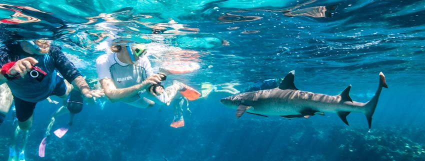 Kuata Island - Snorkelling with sharks