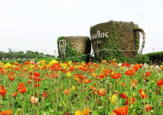 O'Sulloc Green Tea Field - Jeju Island