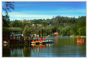 AMAZING KODAIKANAL AND OOTY
