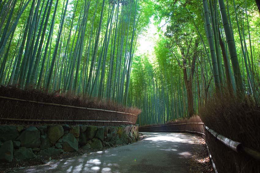Sagano Bamboo forest Arashiyama - Kyoto