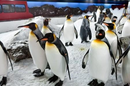 Antarctic Encounter - Auckland