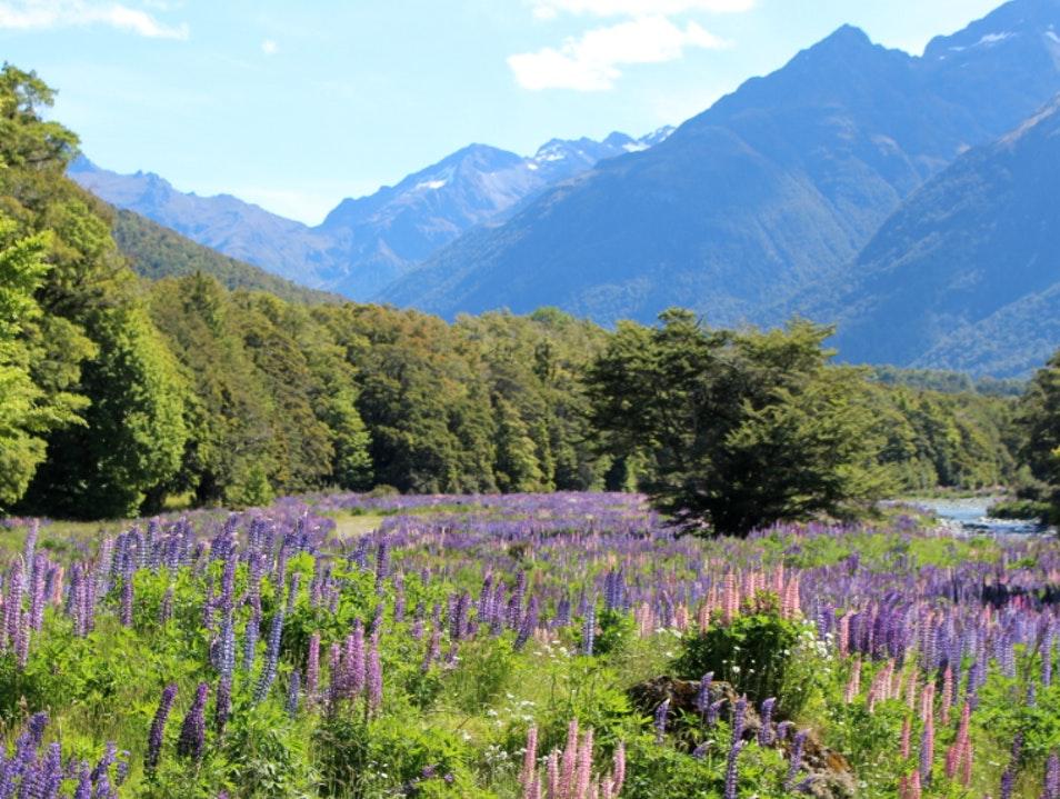 Eglinton Valley - Te Anau