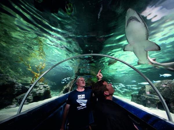 Kelly Tarlton's Sealife Aquarium - Auckland