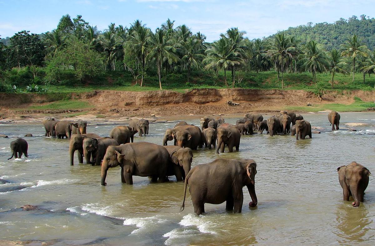 Pinnawala Elephant Orphanage - Colombo