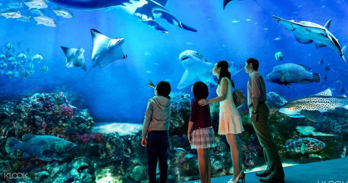 Sentosa - S.E.A Aquarium