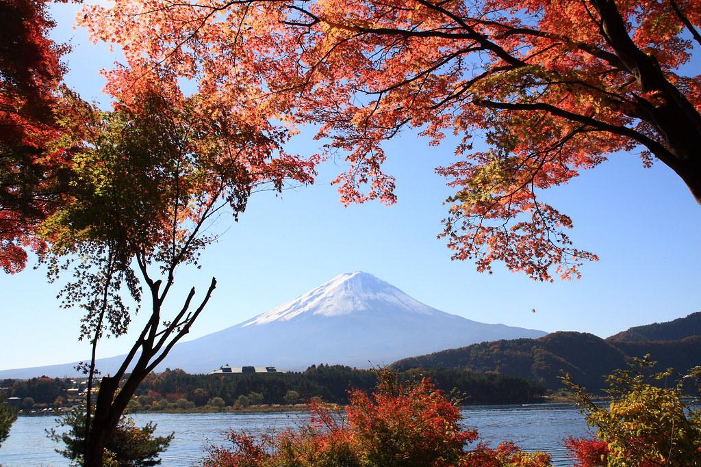 Mt. Fuji Autumn View - Japan