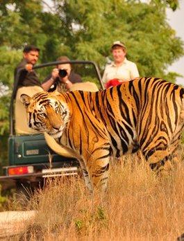 Big Breaks Wildlife Tours